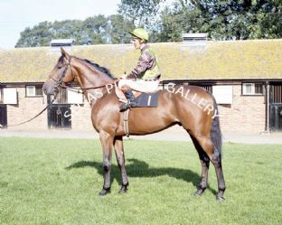 Bustino with Joe Mercer (b711-01)